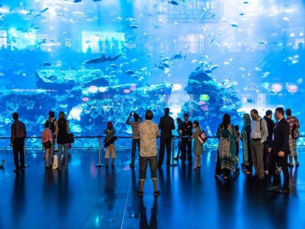 6-Akwarium_Dubai_Mall