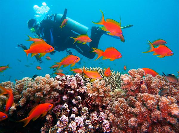3-diving-1